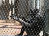 obisk-zoo-2-r-11